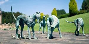 The Dog at Chatsworth